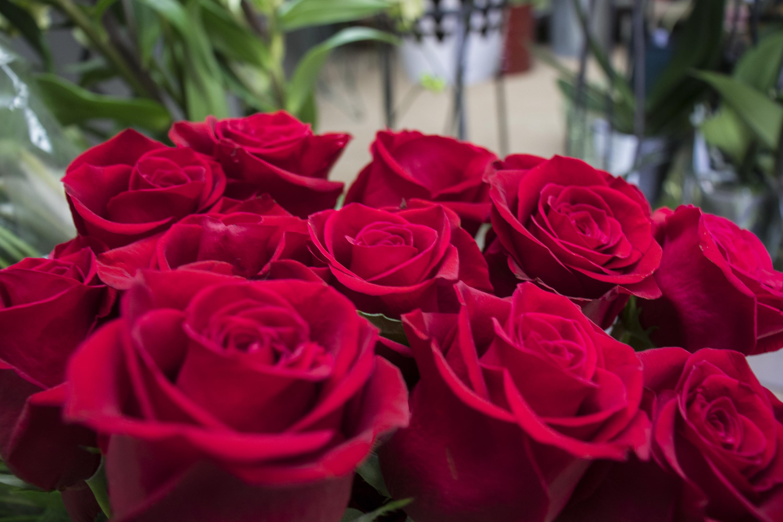 Rosas de Milagros Albitos.