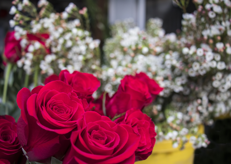 Ramo de rosas de Milvia.